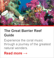 The Great Barrier Reef Guide