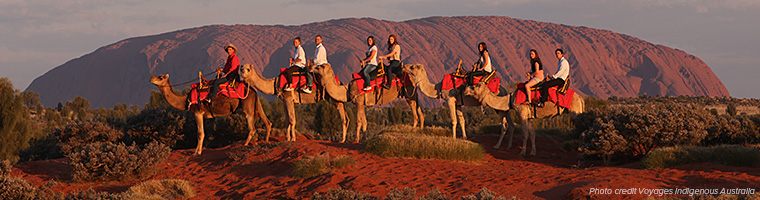 Camel train at Uluru